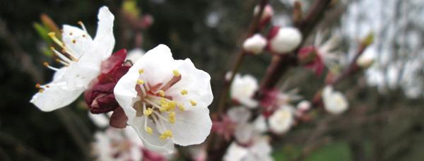 Flower-blossom-banner
