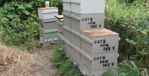 catspawbees